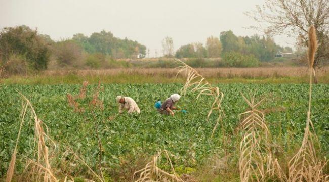 Ziraat Bankası'ndan çiftçiler için yeni kredi