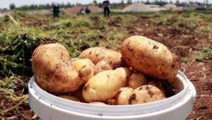 Patates ve soğan ihracatında ön izin şartı kalktı