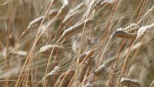 TÜİK'in, 'tarım sektörü büyüdü' açıklamasını oda başkanları yorumladı