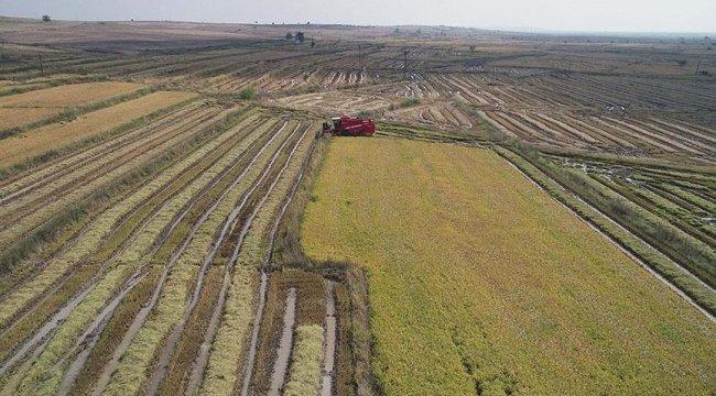 BM Gıda ve Tarım Örgütü'nden dijital tarım stratejisine destek